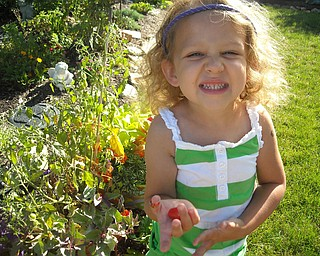 Julia's first tomatoes! It's Julia Grace Basista, 3, of Boardman. She waters, picks and eats her own tomatoes this summer! Julia is the daughter of Tom and Jenefer Basista.
