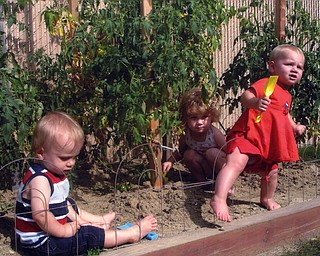 """Brelyn, 3, Kaelyn, 1 1/2, and Hadyn, 1 1/2, children of Brandon and Jackie Bower of Austintown, help with """"de-weeding"""" the tomato garden."""