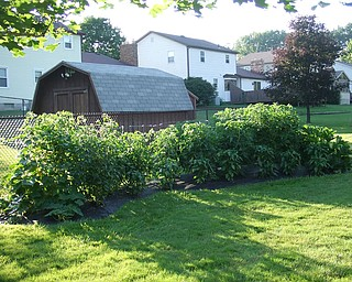 """This is a picture of Don and Sallie Lepore's backyard garden in Boardman. They grow tomatoes, peppers, zucchini, cucumbers, and eggplant. """"Gardening is fun but also a lot of work,"""" says Sallie Lepore."""
