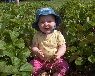 This is a picture of Allison Courson on her first attempt to pick (and eat) strawberries. Sent in by her grandparents Mike and Theresa Semchee