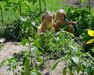 Tom Klughart of Canfield sends photos of his granddaughters Madison 5, and Gracie Klughart 3, planted green beans and recently harvested plenth of beans.