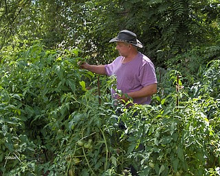 Lary Beck of Campbell has been gardening for 28 years and has been especially active since he retired from the Lordstown General Motors plant.