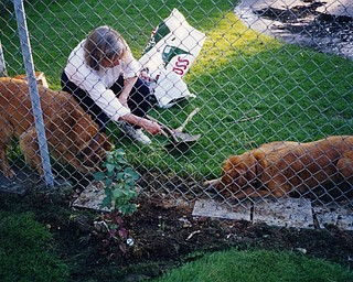 """Marilyn Cheney of Poland works in her garden. """"It's always nice to get help from 'friends,'"""" she writes."""
