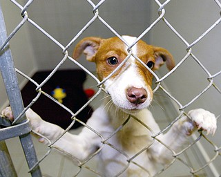 TAKE ME HOME: A dog housed at the Lawrence County Humane Society in New Castle pokes his nose through his pen toward visitors.