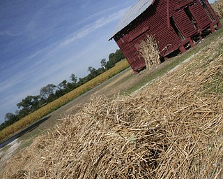Haystacks were scattered but very little sign of GMA is seen left at Henry and Linda Lipps' Eagle View Farm in Gustavus.