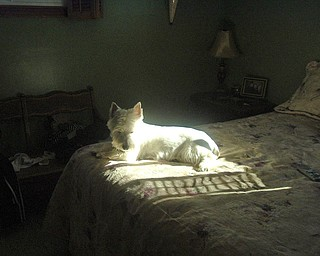 My name is Marti Dorney and this is our dog Barney.  Barney loves to