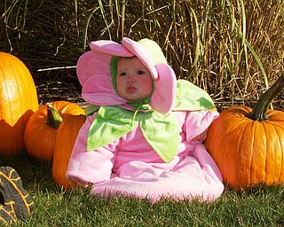 Seth and Kelly Matey of New Springfield shared this shot of their daughter, Cali, with pumpkins