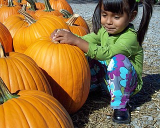Colleen Ruggieri of Canfield sent this shot of her daughter,  Maya Rose Ruggieri, at Park's nursery.