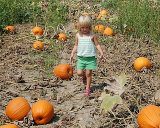 Gracie Pesa, 3 1/2, visits at her first pumpkin patch this past September. She was awed by how they grow in the fields and wanted to pick them. She's the daughter of Lori and Michael Pesa of Liberty.
