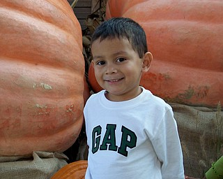 Ryan Antonio Ruggieri seems to love the giant pumpkins at Park's nursery. His mom, Colleen Ruggieri of Canfield, sent the photo.