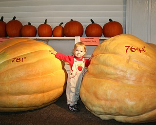 Jaime Jean Hoefert, 19 months, of North Lima, enjoyed the giant pumpkins at the Canfield Fair, said her mom, Sarah.