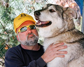Marc DeBolt of Newton Falls pets Rambo - a Timberwolf he cares for at his Newton Falls House - he hopes  to make a wolf sanctuary someday.