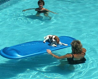 "Sun ,a pool ,a raft and cool water is all the joy we need in this world on a hot summer day. This is a pic of our Cavalier King Charles ""Abby"" She loves swimming in our pool and floating around on her raft during those dog days of summer. No need for a run to the water dish either she just hangs her head over the side and ahhhh all the refreshment she needs.Also enjoying the pool is her owner Denise DeLuca from Struthers and her sister Marilyn Tekac from Poland. Ohh we cant wait for the joyous return of the ""dog days of summer"""