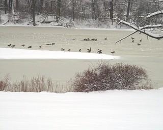 Judy Lockshaw watched waterfowl take a swim in the frigid waters in Mill Creek Park Jan. 10.
