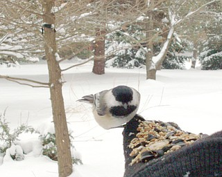 Daan Reinhart  of New Springfield enjoyed a close-up visit with a chickadee willing to eat off his hand.