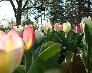 Fellows Riverside Gardens, April 17, 2009
