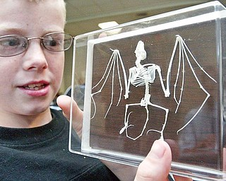 Dylan Belski, 9, of Cortland, examines a bat skeleton during a Tuesday program about bats at Trumbull Agriculture and Family Education Center in Cortland.