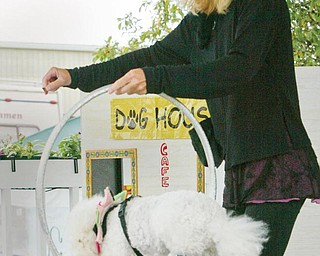 DOG DAYS OF SUMMER: Poodle handler Michelle Harrell shows that her poodles can jump through hoops, retrieve a pretend baby in a pretend burning house and otherwise ham it up. They were performing  tricks  Tuesday, the Trumbull County Fair's opening day.
