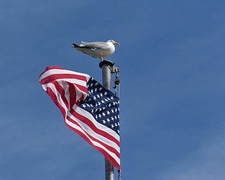 Peter Gabriel of Boardman took this picture recently at Plymouth Harbor. The flag flies over the Mayflower II.