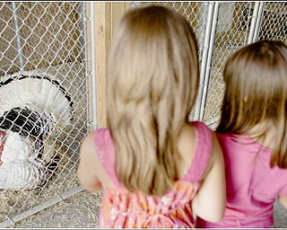7.5.2009 Hanna Medved, 9 of Vienna, and Gianna Socciarelli, 7 of Canfield, watch a turkey display its feathers at Mill Creek MetroParks' Farm in Canfield on Sunday afternoon. Geoffrey Hauschild