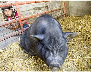 7.5.2009 Gianna Socciarelli, 7 of Canfield, watches a pig stand up after getting a belly rub at Mill Creek MetroParks' Farm in Canfield on Sunday afternoon. Geoffrey Hauschild