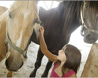 7.5.2009 Hanna Medved, 9 of Vienna,  pets Eddie, a palomino horse, while another horse, Manny, towers over her at Mill Creek MetroParks' Farm in Canfield on Sunday afternoon. Geoffrey Hauschild