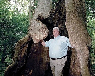 Bob Zedaker, chairman of the Poland Municipal Forest board, stands inside a hollowed out sycamore tree in Poland's Municipal Forest last week. Zedaker's grandfather helped build a pavilion near the forest's College Street entrance.
