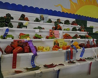 A vegetable display at the Canfield Fair