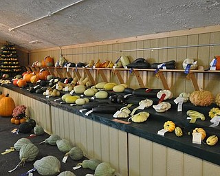 Mahoning Valley Giant Pumpkin Growers squash display