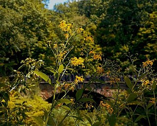 Tall grasses and weeds bring out the yellows and oranges of the Parapet Bridge