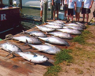 What a catch! Taken at the Outer Banks in North Carolina and provided by Howard and Suzie Hallas of Poland.