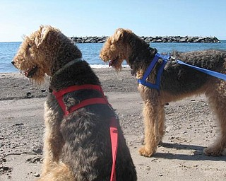 This picture of Gracie and Jack enjoying Presque Isle was sent by Ray and Mary Pat George of Youngstown.