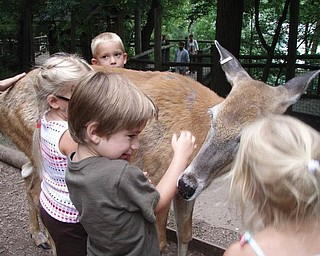 While visiting in Youngstown this summer, Thomas Hull III, 4, and his parents, Larisa and Thomas Hull of Ann Arbor, Mich., spent time at the Pittsburgh Zoo, where he made this friend in the petting area.