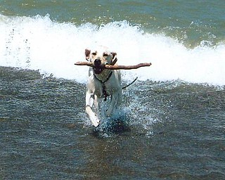 Fisher, who belongs to Howard and Suzie Hallas of Poland, is having fun in Lake Erie.
