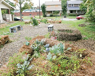 CLEAN AND GREEN: The Growing for Change garden on East Avondale Avenue, Youngstown, is where a house once was. Because there were fears of soil contaminants, straw, cardboard and paper were put down to create a cleaner place from which vegetables can grow.
