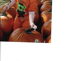 James Lipjanic, son of Jim and Candace Lipjanic of Boardman, inspected the pumpkins last year at the Whitehouse Farms Pumpkin Fest.