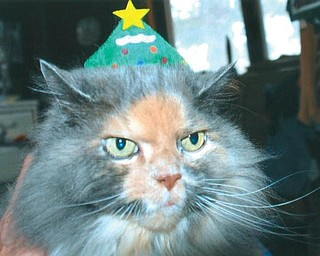 PICTURE PURR-FECT: Pumpkin posed for a full second to allow this Christmas tree hat on her head. She belongs to Lana Van Auker of Canfield.