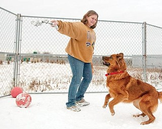WINTER FUN: Kate McDermott of Angels for Animals, plays with one of the dogs at the agency's compound on state Route 165 in Beaver Township. A dog's size and type of coat need to be considered in the length of time the animal spends outdoors in the winter.