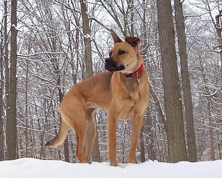 Paula Ludt of Poland sent us this picture of Izzy enjoying a winter day at the Poland Woods..