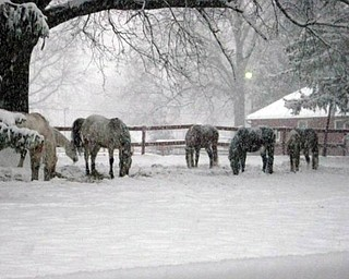 Laura Bell sent this beautiful picture taken art ZedakerÕs Anjon Acres Horses in Poland, saying, ÒI know they arenÕt kids, but they run around and have fun like kids do.Ó Good point, Laura..