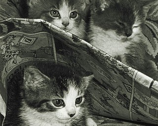 """Eeney, Meeney and Sleepee,"" taken by Michael J. Lacivita of Youngstown."
