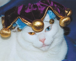Lana VanAuker of Canfield says Martina, her fat Tuesday kitty, is celebrating Mardi Gras.