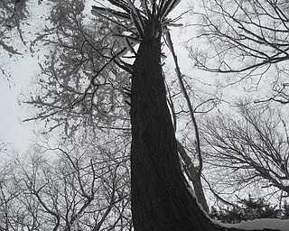Jackie LeViseur sent this picture of a tree in Mill Creek Park..