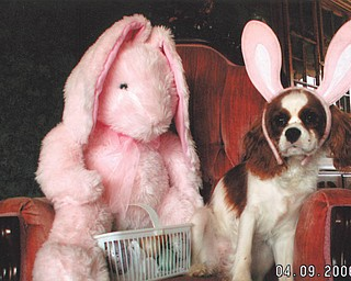 Abby's owners, Tom and Denise DeLuca of Struthers, say she loves chasing rabbits in the backyard, although she's willing to stop long enough to pose for a picture since it always involves a treat.