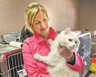 Nikole Baringer, chief executive director of Animal Charity, holds Oliver, a friendly, 4-year-old cat who's ready for adoption. Animal Charity moved last month from the South Side Youngstown building it occupied for about 30 years to a new location on Market Street in Boardman.