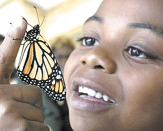 Donovan Dorsey, a fi rst-grader at Jeff erson Elementary School in Warren, frees a butterfl y during a school assembly. Students released butterflies in memory of loved ones in their lives who have died, moved away or been incarcerated. Donovan freed his butterfly in memory of his cat Fluffy.