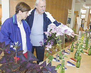LISA-ANN ISHIHARA | THE VINDICATOR..Bob Horvath of Youngstown and his daughter, Paula, look at the horticulture section of the Garden Forum Spring Flower show inside Fellow Riverside Gardens.