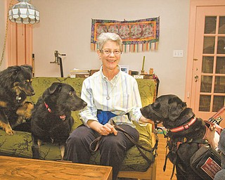 Tara McKibben of Youngstown, who has multiple sclerosis, sits with her pet dogs Suka, Hiko, and her canine helper, April. McKibben hopes to raise $1,000 for Canine Partners for Life of Pennsylvania. If she raises the most money, April will get a day off from assisting McKibben.