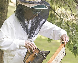 Brashen uses a smoker to keep bees at bay as she inspects a frame filled with honey. Her beekeeping outfit is a white jumpsuit that zips because buttonholes would allow wayward bees in. .