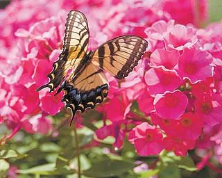 Butterfly at Fellows Riverside Gardens.